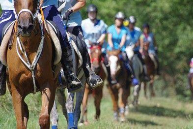 Centro Ippico Ambassador - Endurance equestre
