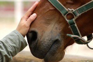 Centro Ippico Ambassador - Riabilitazione Equestre